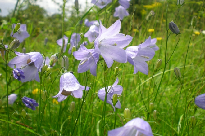 Top Plants For The Wildflower Garden The Wildflower Garden - Wild flower garden