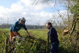 Hedge laying at Joans Hill Farm