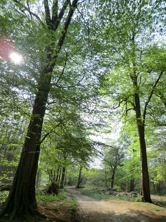 Woodland at Ranscombe Farm reserve. © Plantlife