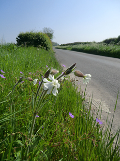 A road verge in Dorset, late May...