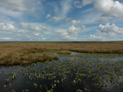 Plantlife's reserve at Munsary is part of the Caithness & Sutherland Peatlands IPA. ©Michael Scott/Plantlife
