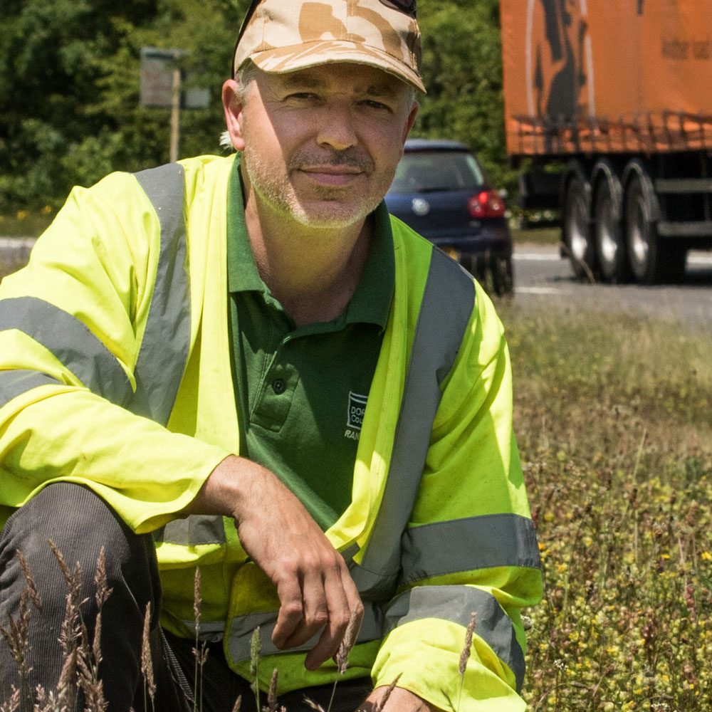 Dorset Council manages road verges better for nature